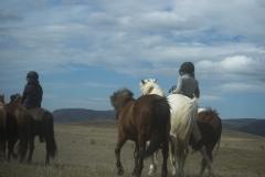 Riders along a road in Suðurland region, Iceland.