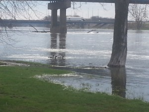 Rock River Flooding - More ducks, more ducks!