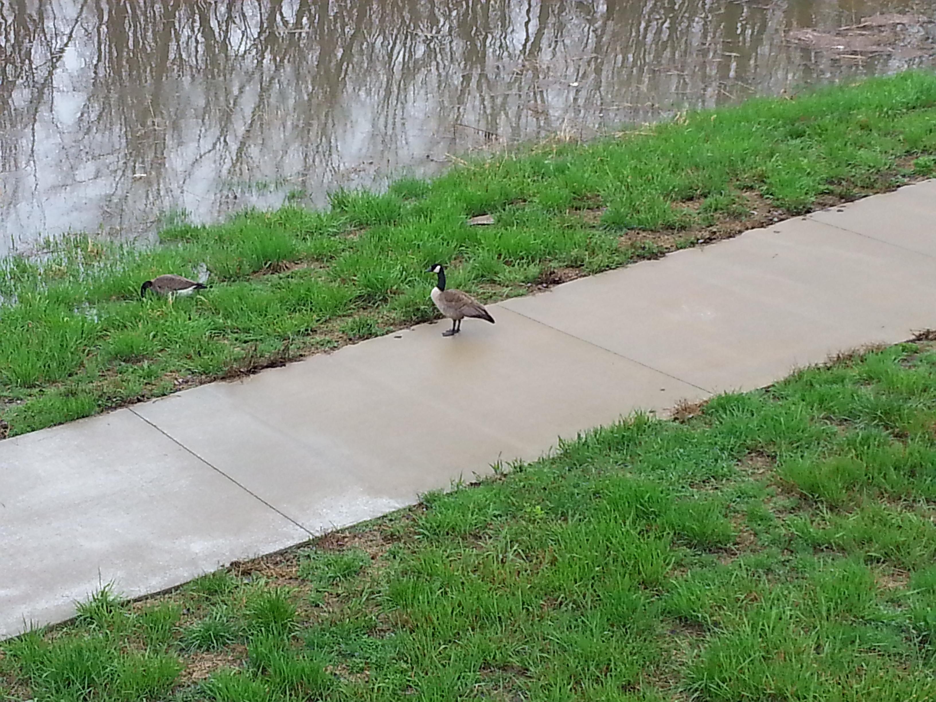 Sidewalk/Riverbank